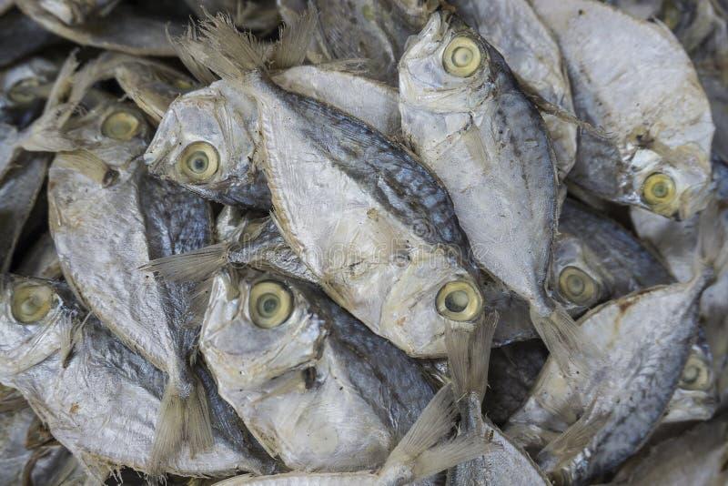 Pilha de anchovas secadas fotografia de stock royalty free
