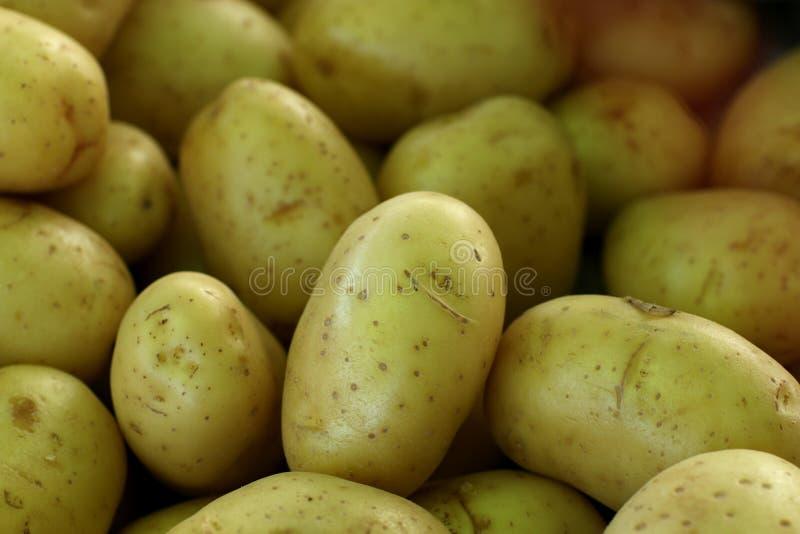 Pilha de batatas frescas foto de stock