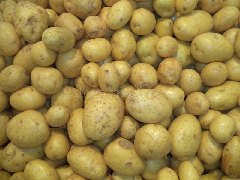 Pilha de batatas lavadas frescas da colheita nova imagens de stock