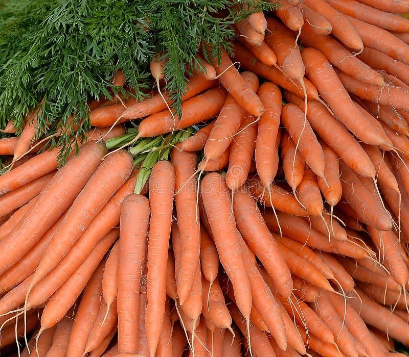 Pilha de cenouras escolhidas frescas imagem de stock