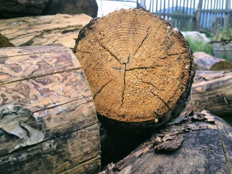 A pilha de logs da lenha, cruz rachada cortou a seção de um log de madeira Textura orgânica natural, teste padrão, fundo de racha fotografia de stock royalty free