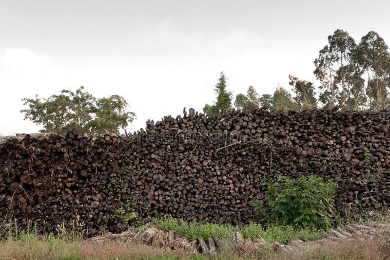 Pilha de madeira coberta pela folha e pela grama fotografia de stock royalty free