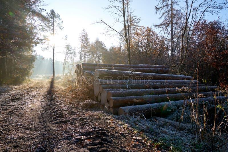 Pilha de madeira no lado da estrada fotos de stock royalty free
