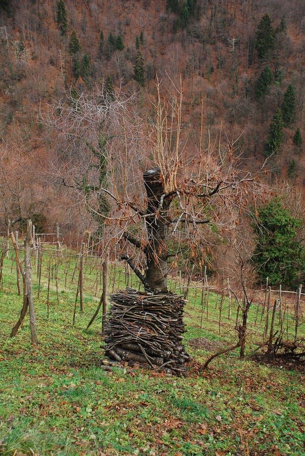 Download Pilha De Madeira Por Árvore Imagem de Stock - Imagem de filiais, wintry: 12809459