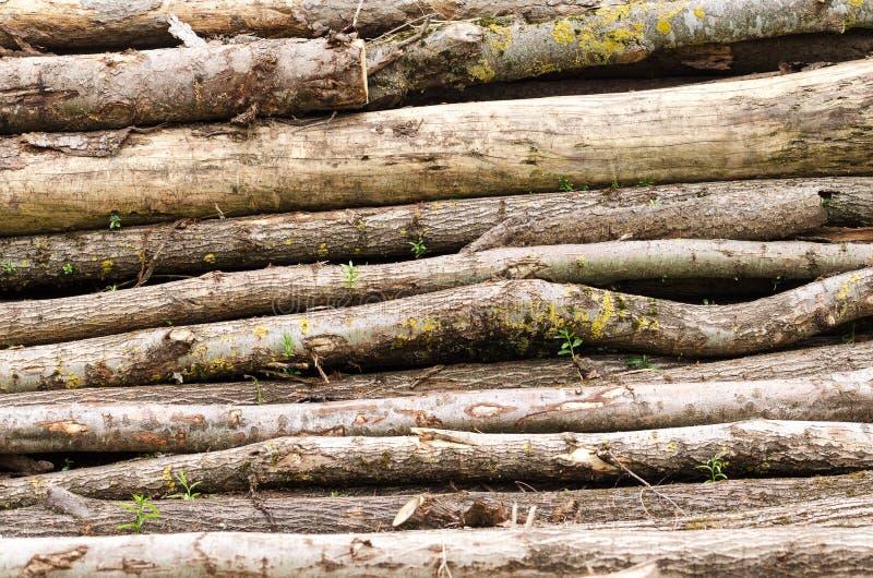 Pilha de madeira velha com troncos imagens de stock royalty free