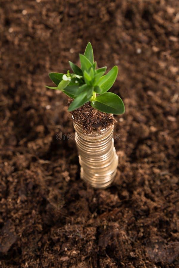 Pilha de moedas e de rebento imagens de stock royalty free
