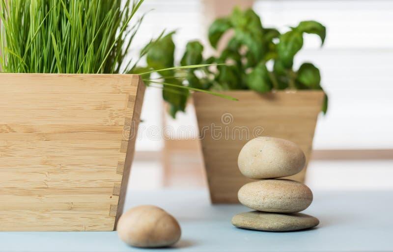 Pilha de pedras e de planta lisas dos wheatgrass no plantador de bambu fotografia de stock