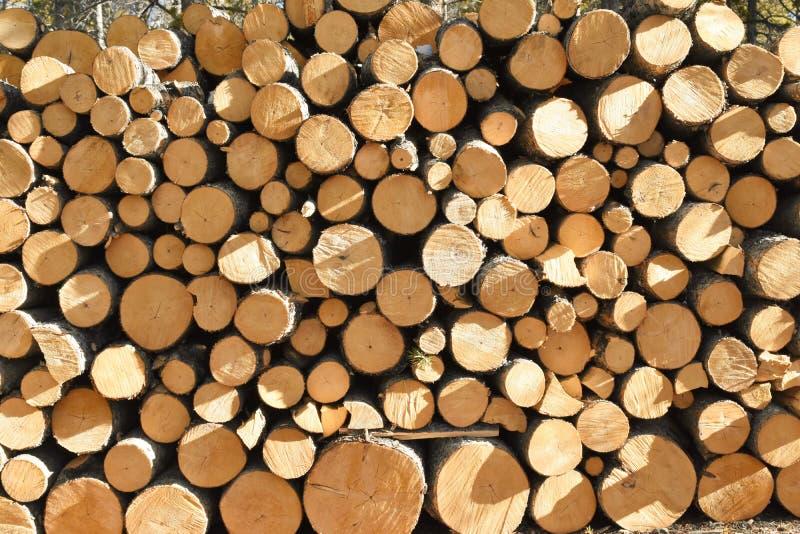 Pilha de pinhos recentemente cortados foto de stock royalty free