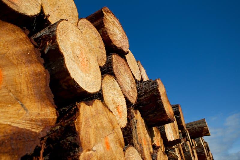 Pilha de registros da madeira do registo fotografia de stock royalty free
