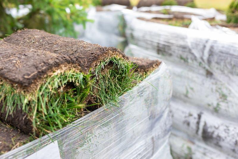 Pilha de relva de turfa para relva Tapete de turfa, rolo de sod, rolo de erva de turfa para paisagismo imagens de stock