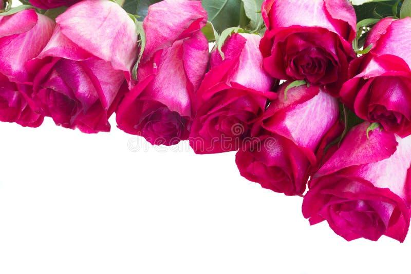 Pilha de rosas cor-de-rosa fotografia de stock royalty free