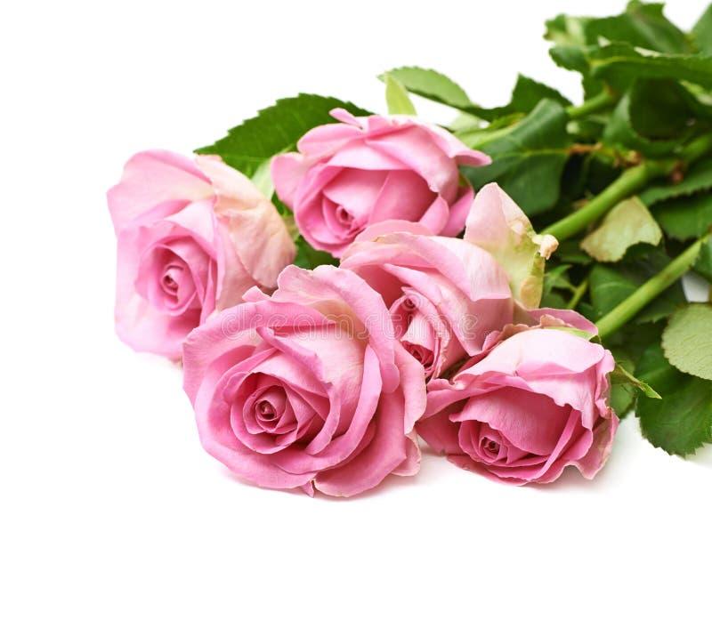 Pilha de rosas cor-de-rosa fotografia de stock
