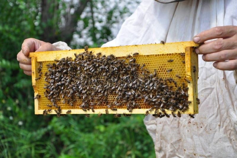 Pilha de terra arrendada do apicultor com abelhas e mel imagens de stock royalty free