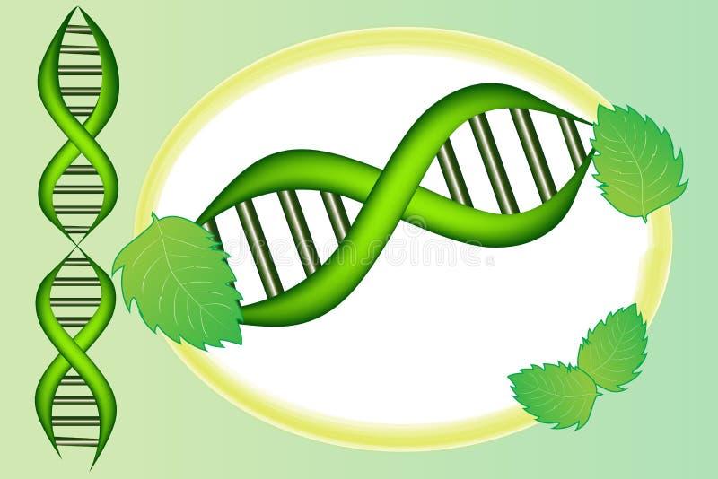 Pilha do ADN com projeto verde do vetor do ícone do quadro das folhas ilustração do vetor