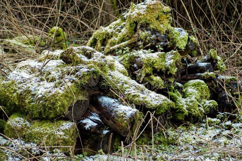 Pilha do log - habitat para invertebrtates e mamíferos fotografia de stock royalty free