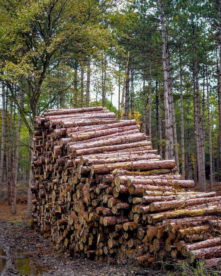 Pilha do log na floresta - empresa de registro foto de stock royalty free