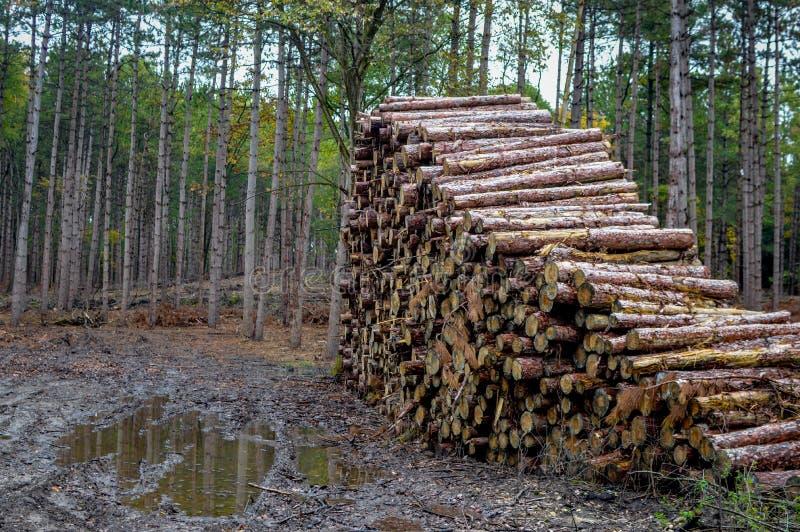 Pilha do log na floresta - empresa de registro fotos de stock royalty free