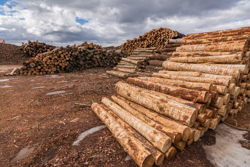 A pilha do pinho entra uma serração para mais ulterior transformação em pelotas na Espanha foto de stock royalty free