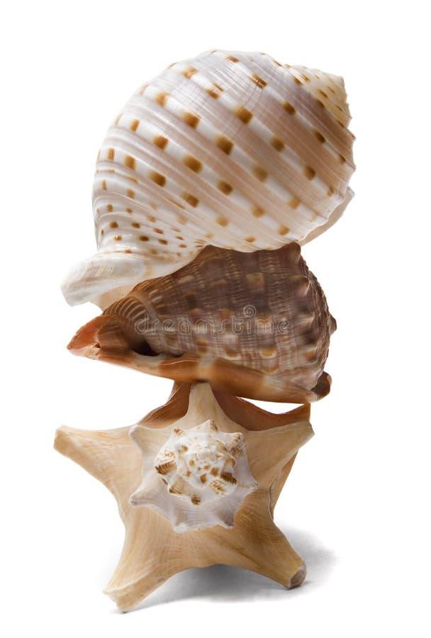 Pilha do Seashell sobre o branco imagens de stock royalty free
