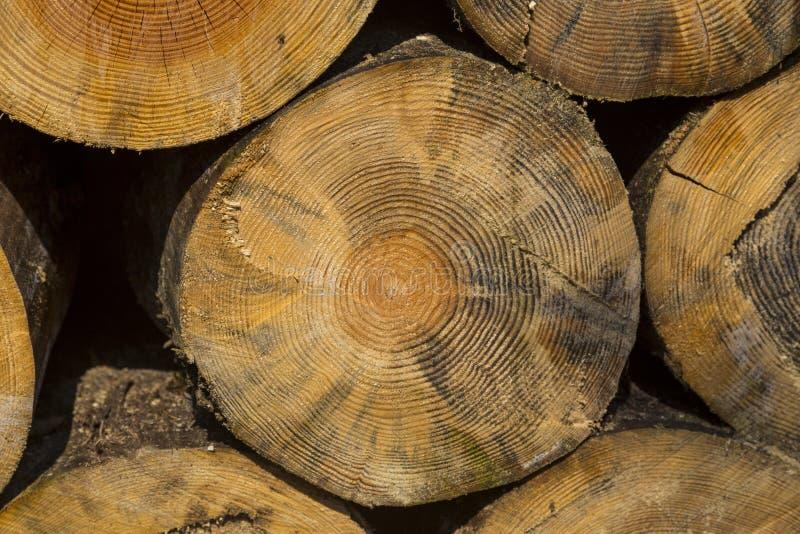 A pilha do tamanho diferente desbastou os logs de madeira preparados para o inverno fotografia de stock royalty free