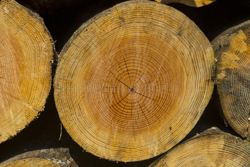 A pilha do tamanho diferente desbastou os logs de madeira preparados para o inverno foto de stock royalty free
