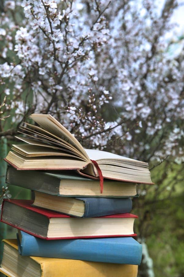 Pilha dos livros no fundo da árvore de cereja fotos de stock royalty free