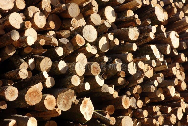 Pilha dos logs colhidos da árvore empilhados imagem de stock royalty free