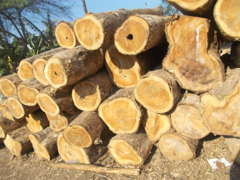Pilha dos logs 5 de madeira imagem de stock