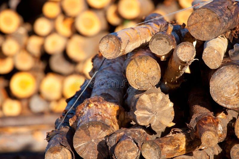 Pilha dos troncos fotografia de stock