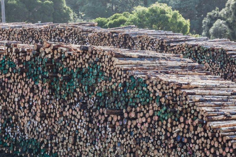Pilha enorme de troncos de árvore em uma jarda de madeira serrada imagem de stock