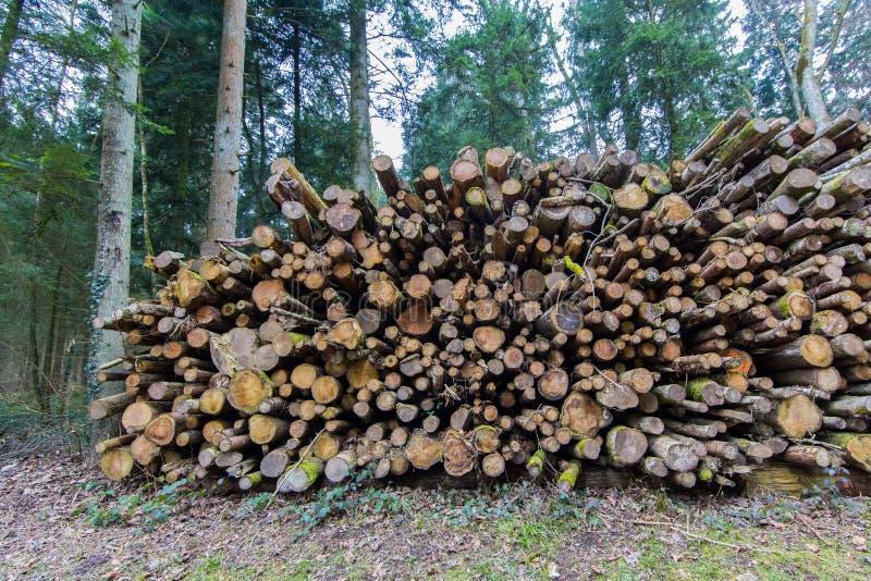 Pilha natural do log na floresta fotos de stock