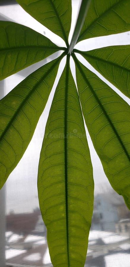 Pilhas da planta fotos de stock royalty free