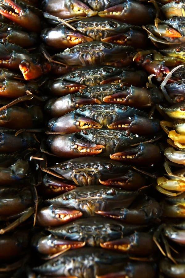 Pilhas de caranguejos frescos fotografia de stock