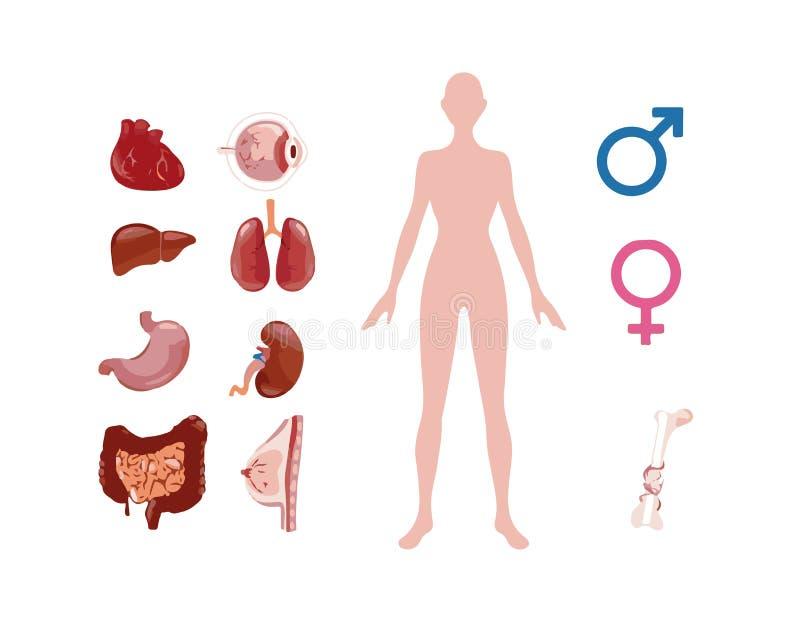Pilhas de corpo humano ilustração do vetor