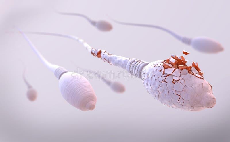 Pilhas de esperma danificadas ao quebrar distante ilustração do vetor