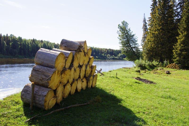 Pilhas de lenha spruce no fundo do taiga foto de stock royalty free