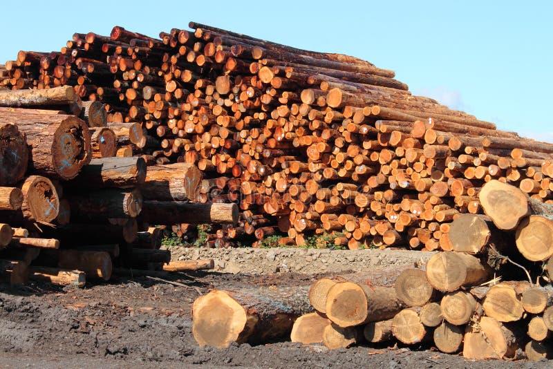 Pilhas de madeira fotografia de stock royalty free