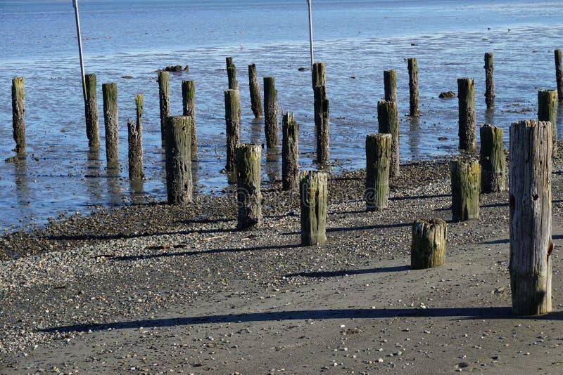 Pilhas de madeira abandonadas na praia no noroeste pacífico imagem de stock royalty free
