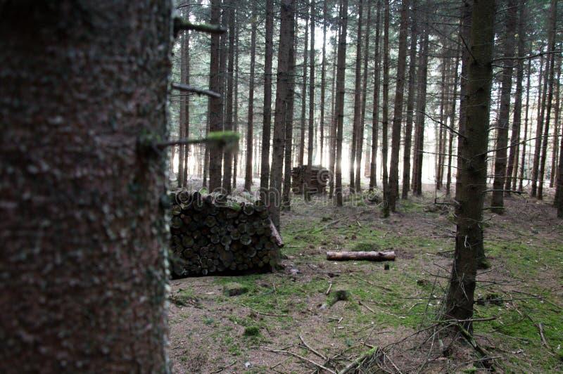 Pilhas de madeira diferentes na floresta fotos de stock