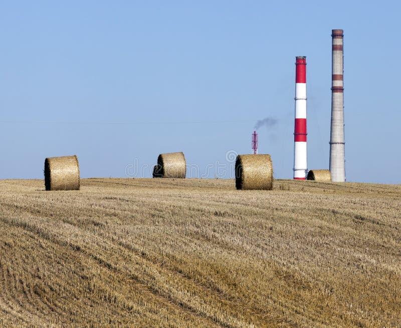 Pilhas de trigo imagem de stock royalty free