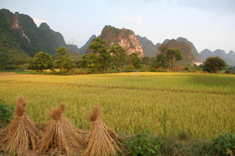 Pilhas do arroz fotos de stock royalty free