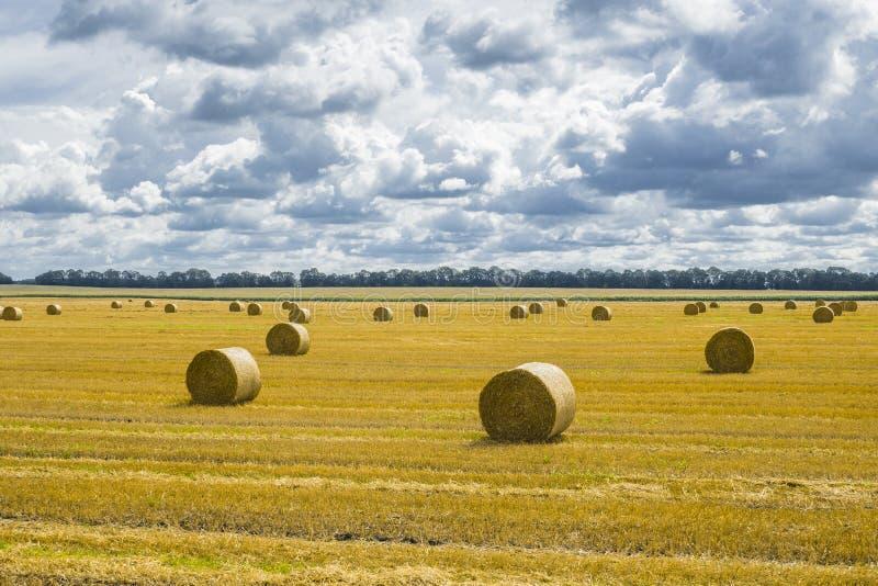 Pilhas do monte de feno e da palha no campo limpado Paisagem agrícola do outono fotografia de stock