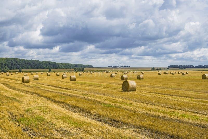 Pilhas do monte de feno e da palha no campo limpado Paisagem agr?cola do outono imagens de stock