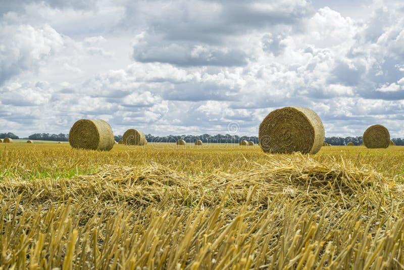 Pilhas do monte de feno e da palha no campo limpado Paisagem agr?cola do outono fotografia de stock