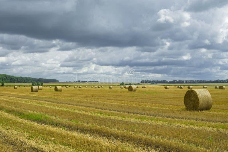 Pilhas do monte de feno e da palha no campo limpado Paisagem agr?cola do outono imagem de stock royalty free