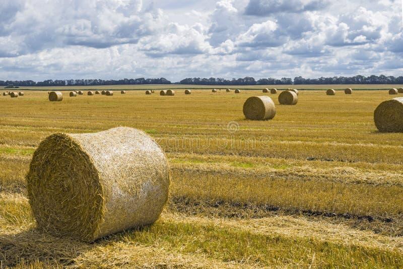 Pilhas do monte de feno e da palha no campo limpado Paisagem agr?cola do outono fotos de stock