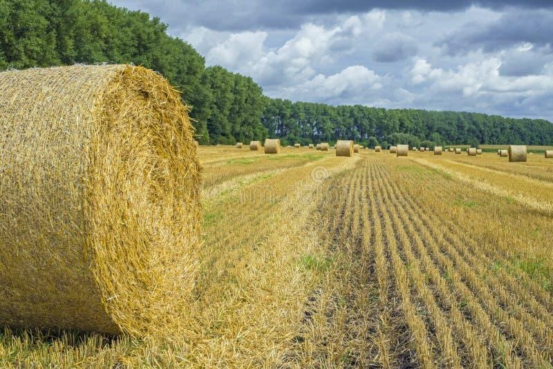 Pilhas do monte de feno e da palha no campo limpado Paisagem agr?cola do outono foto de stock royalty free