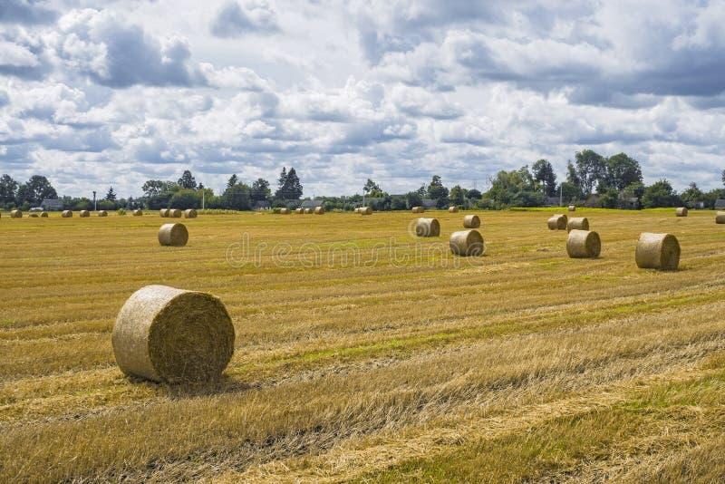 Pilhas do monte de feno e da palha no campo limpado Paisagem agr?cola do outono fotografia de stock royalty free