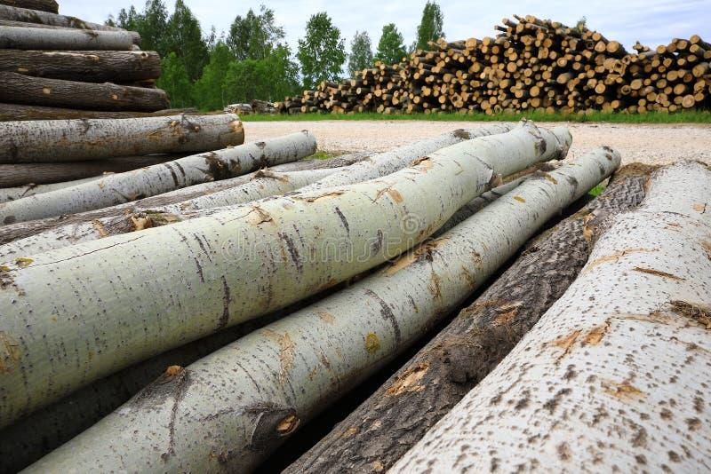 Pilhas dos logs e troncos de árvores do sawdown foto de stock royalty free