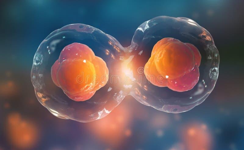 pilhas sob um microscópio Divisão de pilha Terapia celular ilustração royalty free